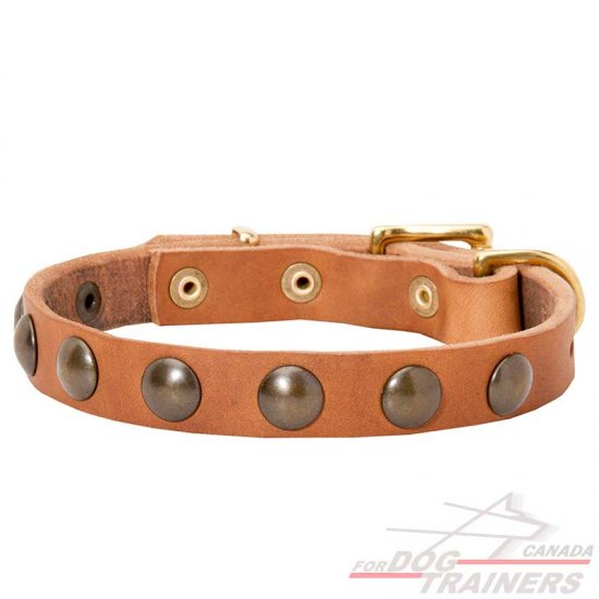 Narrow Studded Leather Collar for Walking Small Breed Dogs