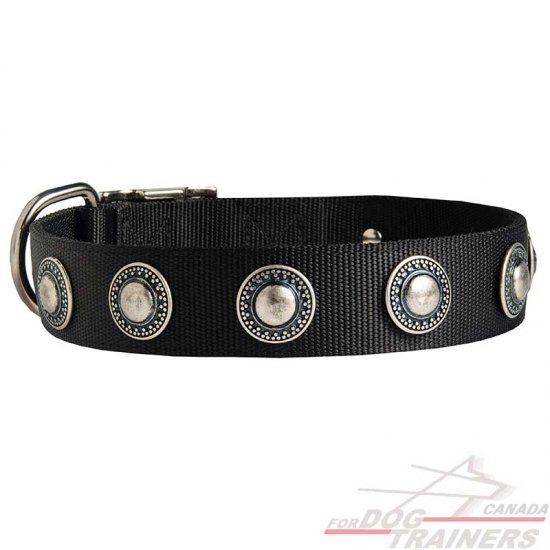 Fashion Nylon Dog Collar with Silvery Conchos for Walking and Training