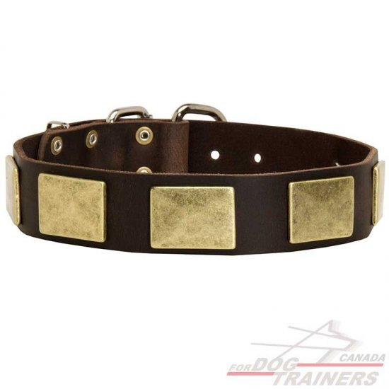 Fashion Leather Dog Collar with Brass Plates