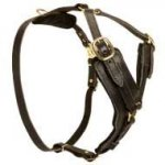 Designer Leather Dog Harness Padded with Heavy Felt