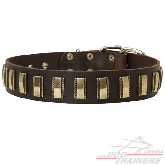 Leather Canine Collar with Vertical Brass Plates