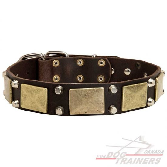 Exclusive Leather Dog Collar with Large Plates and Pyramids