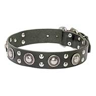Gorgeous 'Rock n Roll' Leather Dog Collar With Mix of Decorations