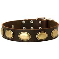 Leather Collar Decorated With Vintage Brass Ovals For Your Dog