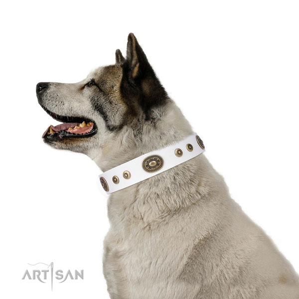 Fashionable adorned natural leather dog collar for daily use