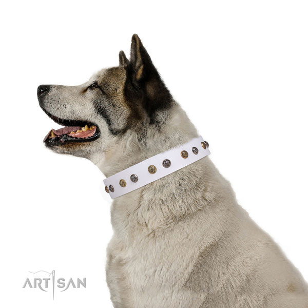 Stylish walking embellished dog collar made of strong leather