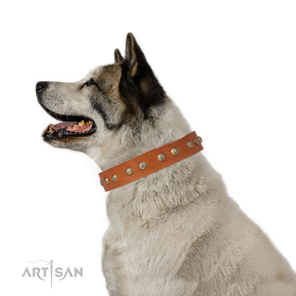 Exquisite studs on everyday walking full grain genuine leather dog collar