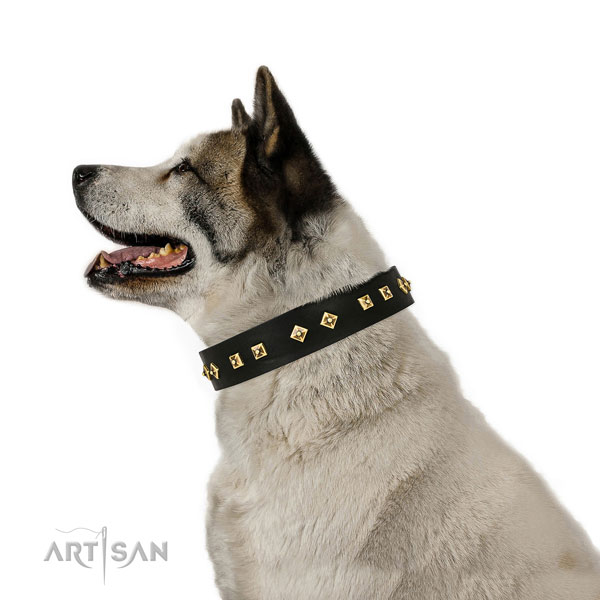 Stunning adornments on basic training full grain leather dog collar