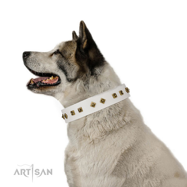 Unusual decorations on comfy wearing dog collar