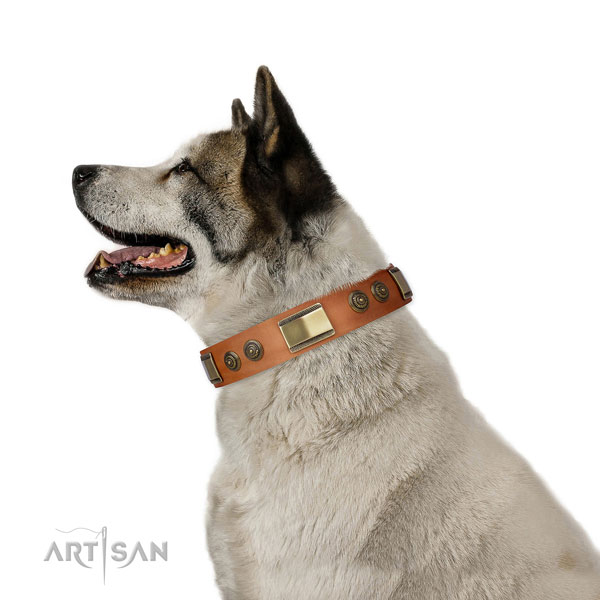 Designer decorations on daily use dog collar