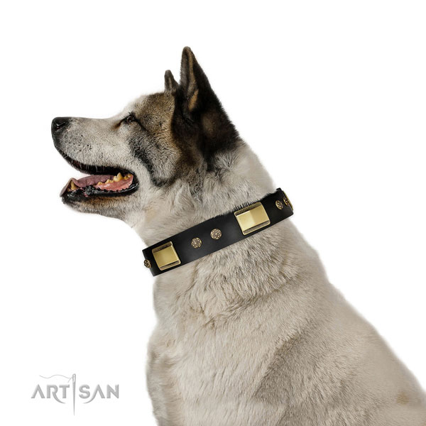 Walking dog collar of genuine leather with impressive embellishments