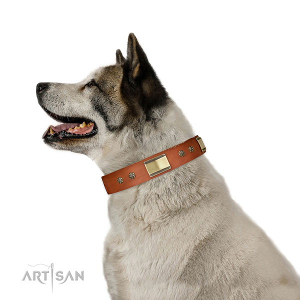 Walking dog collar of natural leather with inimitable studs