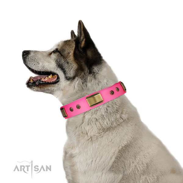 Comfy wearing dog collar of genuine leather with amazing adornments