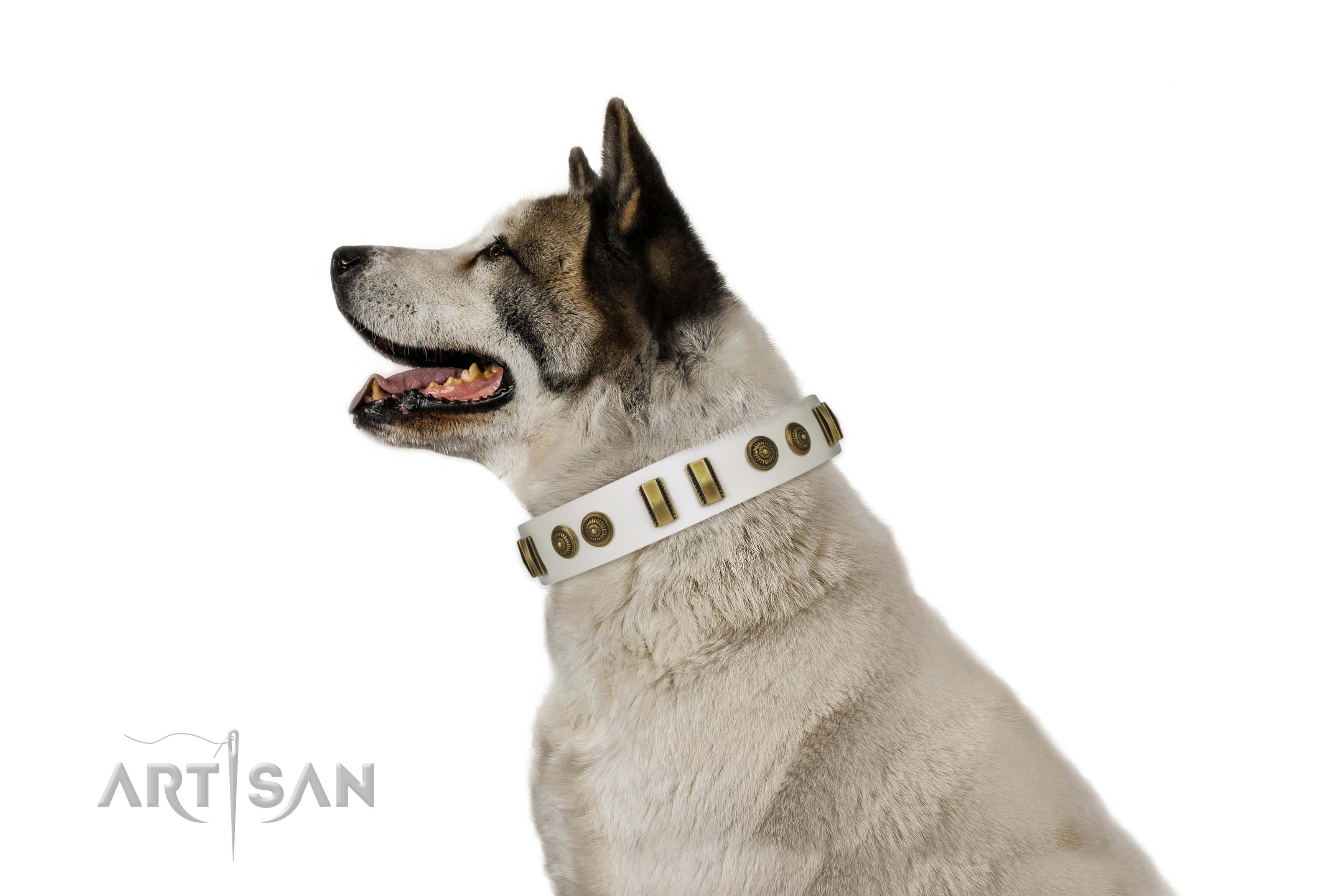 Corrosion resistant D-ring on full grain natural leather dog collar for handy use