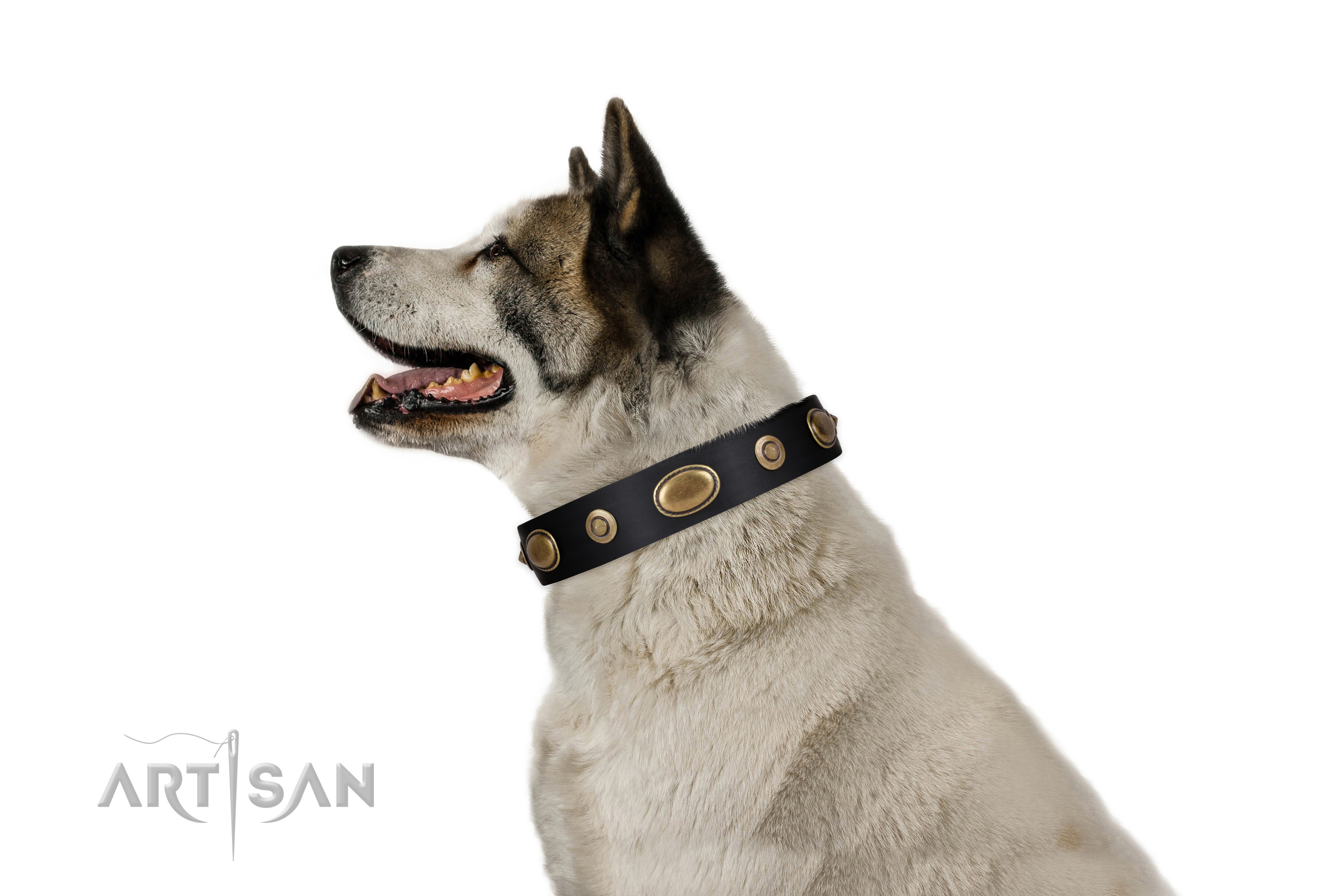 Comfy wearing dog collar of natural leather with exquisite adornments
