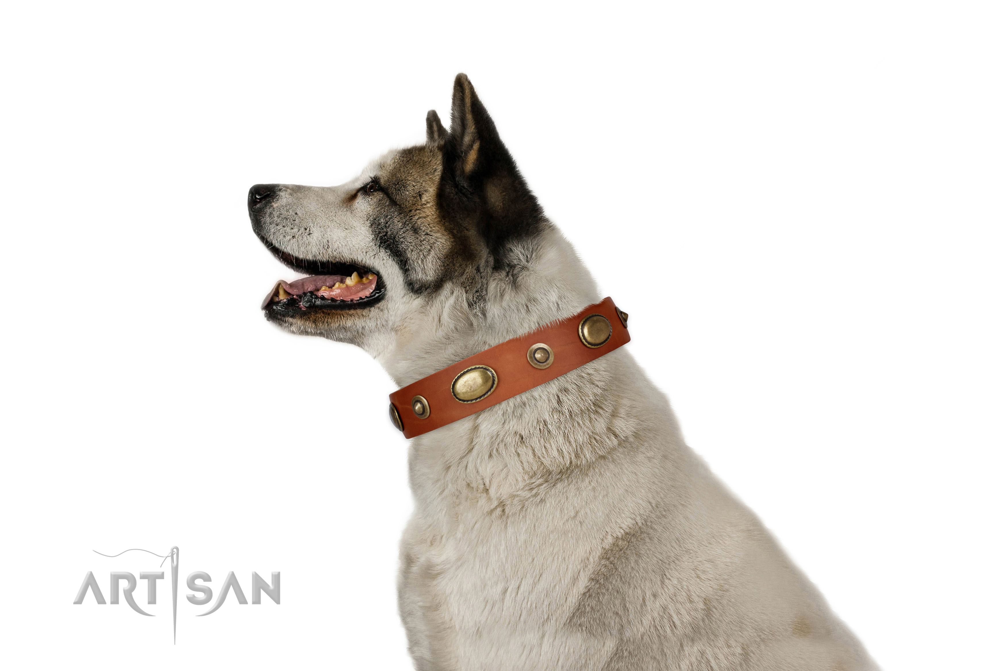 Basic training dog collar of genuine leather with trendy adornments