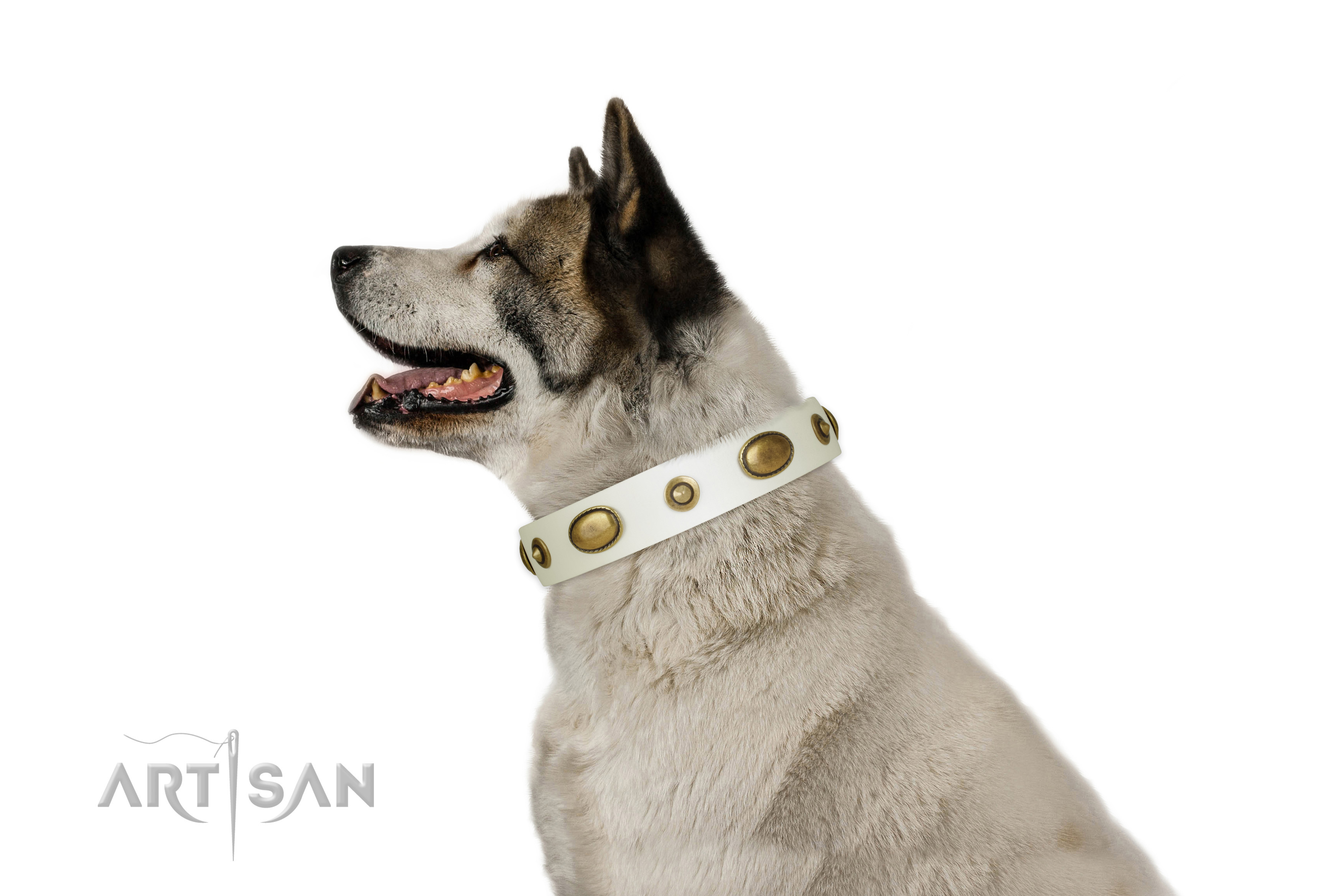 Daily walking dog collar of leather with top notch embellishments