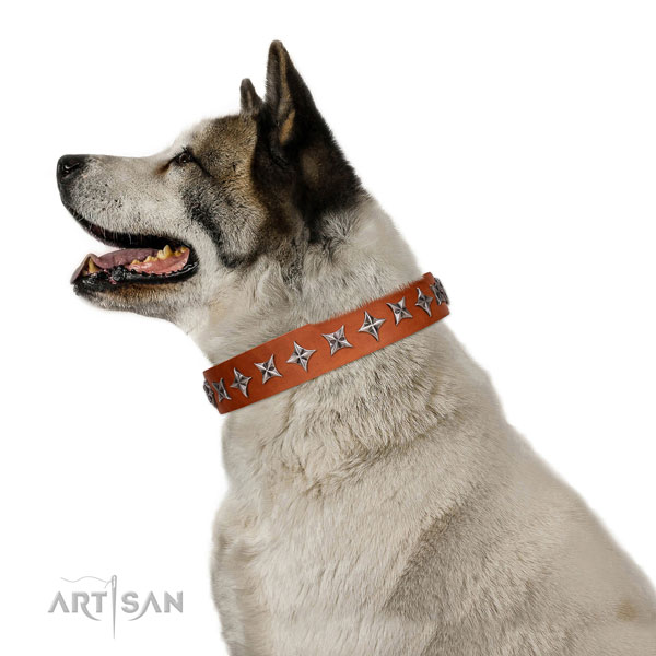 High quality full grain leather dog collar with stylish embellishments