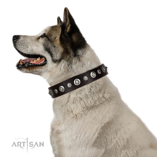 Fine quality full grain natural leather dog collar with impressive studs