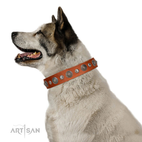 Unusual genuine leather dog collar with corrosion resistant hardware