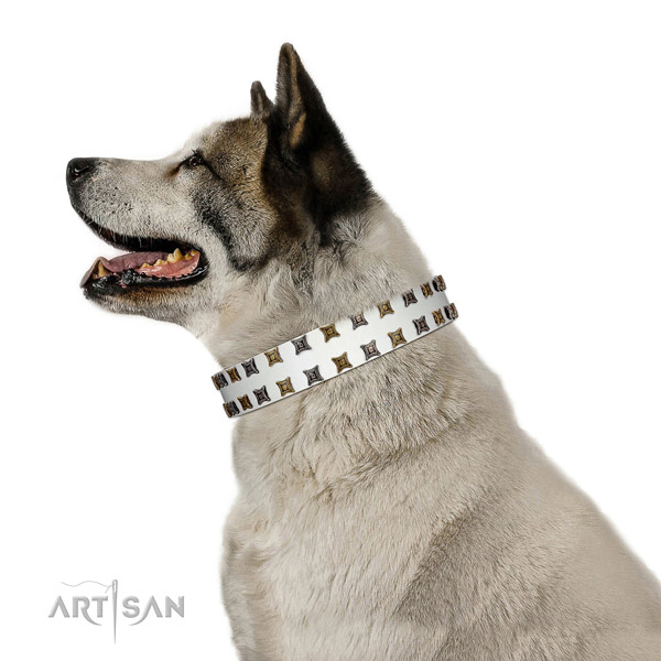 Quality leather dog collar with decorations for your four-legged friend