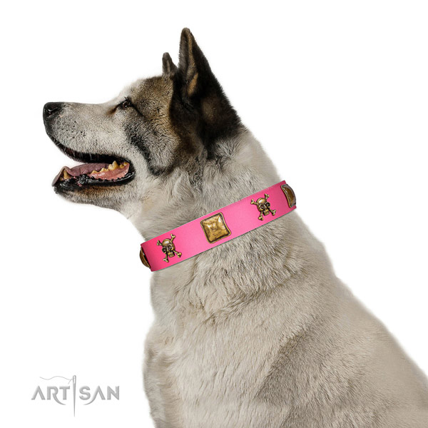 Leather dog collar with exceptional adornments for daily walking
