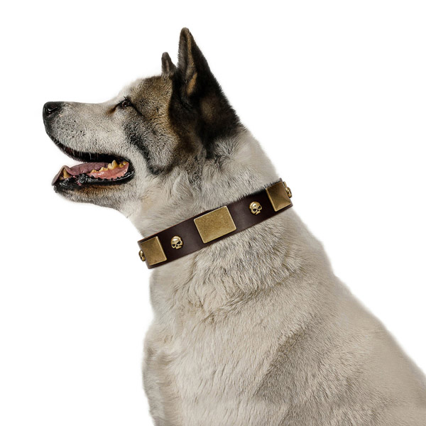Soft full grain natural leather collar with corrosion resistant embellishments for your pet