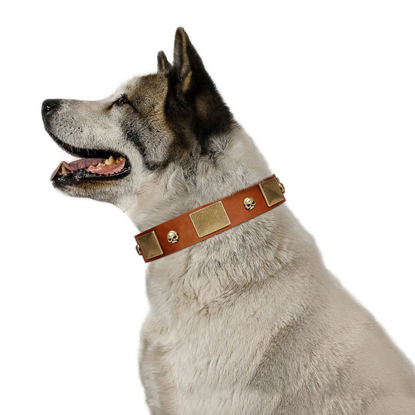 Gentle to touch full grain genuine leather dog collar with corrosion resistant traditional buckle