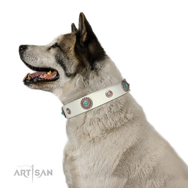 Extraordinary dog collar of genuine leather with adornments