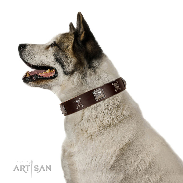 Top rate genuine leather dog collar for your beautiful doggie
