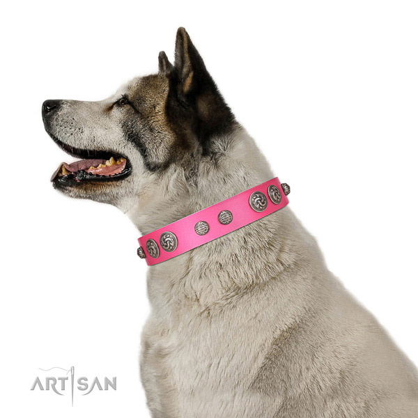 Awesome dog collar made for your stylish four-legged friend