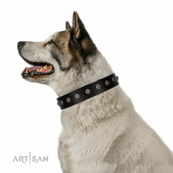 Fancy walking genuine leather dog collar with exquisite embellishments