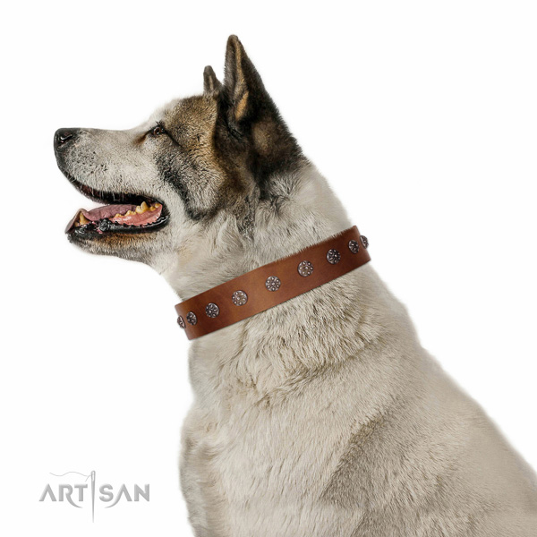 Best quality leather dog collar with adornments for your dog