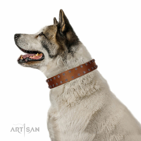 Decorated full grain natural leather collar for comfortable wearing your pet