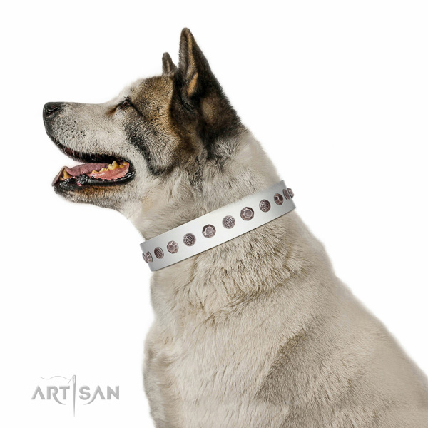 Corrosion resistant fittings on full grain leather dog collar for everyday walking your dog