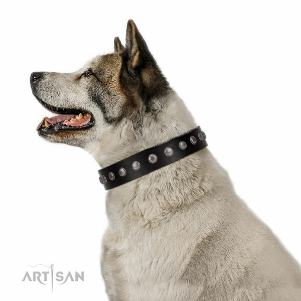 Best quality natural leather dog collar with studs for daily use