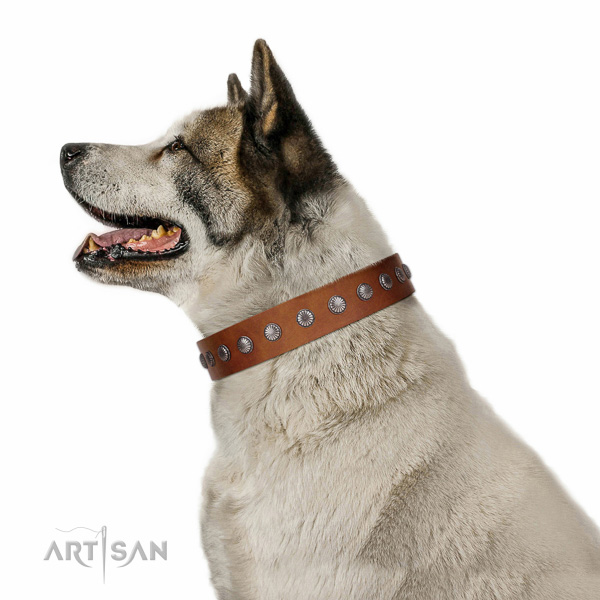 Soft genuine leather dog collar with adornments for daily walking