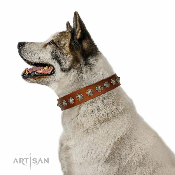 Walking full grain natural leather dog collar with awesome embellishments