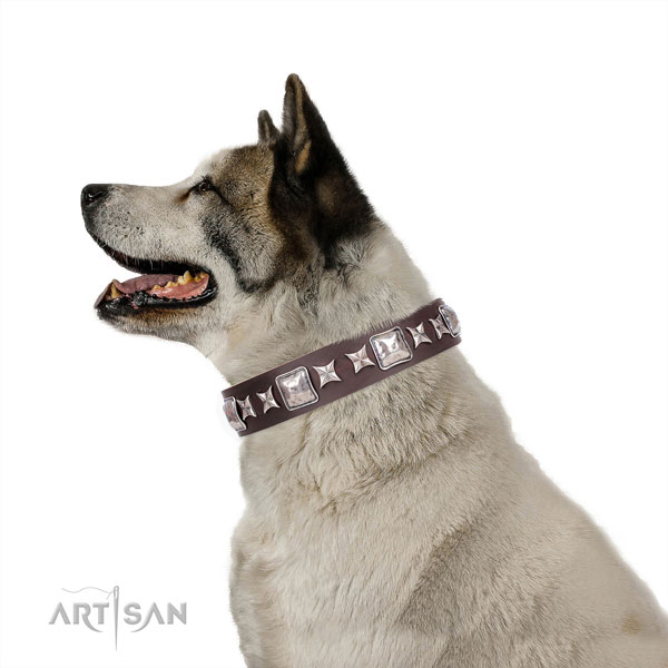 Akita-Inu stylish full grain natural leather dog collar with studs