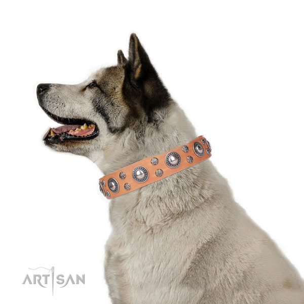 Akita-Inu easy wearing full grain genuine leather dog collar with adornments