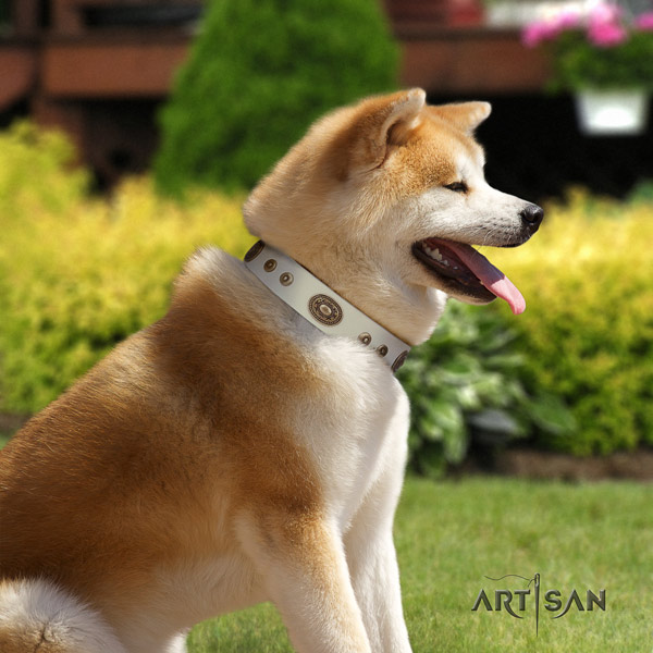 Akita Inu exceptional genuine leather collar for everyday walking