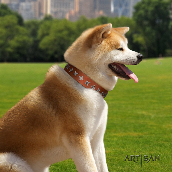 Akita Inu genuine leather dog collar with stylish studs