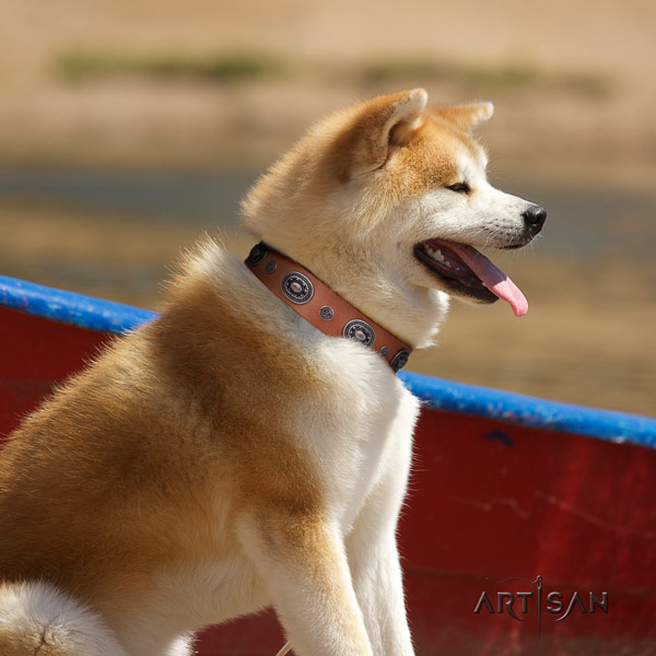 Akita Inu leather dog collar with stylish design studs