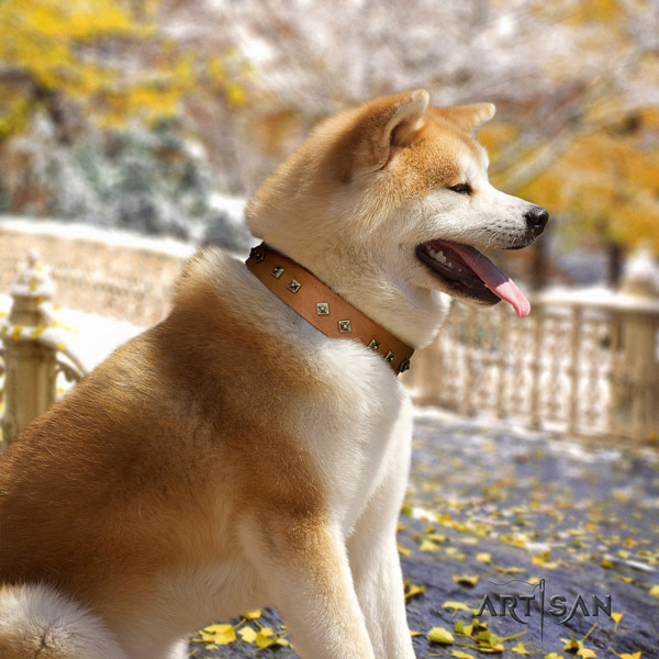 Akita Inu genuine leather dog collar with fashionable adornments