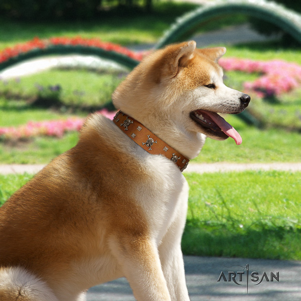 Akita Inu fancy walking genuine leather collar with studs for your canine