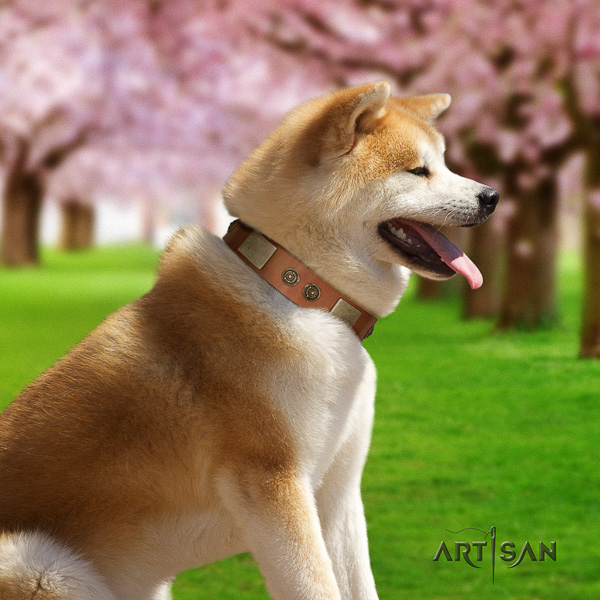 Akita Inu comfy wearing natural leather collar with decorations for your canine
