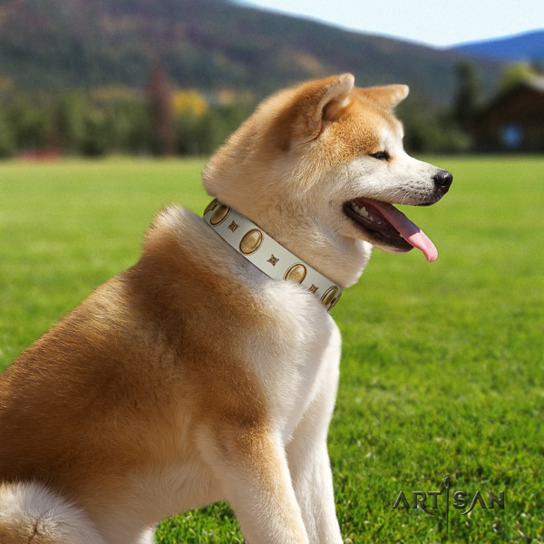 Akita Inu comfy wearing genuine leather collar with decorations for your dog