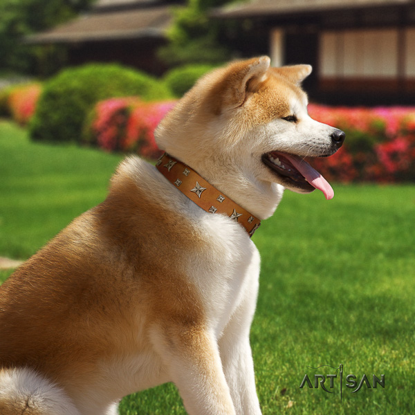 Akita Inu daily use genuine leather collar with decorations for your dog