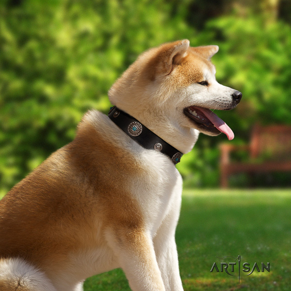 Akita Inu basic training natural leather collar with adornments for your dog