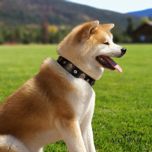 Akita Inu daily use genuine leather collar with studs for your four-legged friend